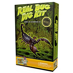 Real Insect Excavation Kit