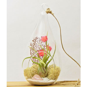 Bliss Gardens Air Plant Terrarium