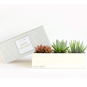 Live Succulent Plant Gift