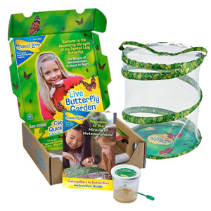 Insect Lore Live Butterfly Growing Kit