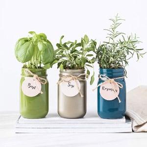 Thoughtfully Gifts, Mason Jar Garden
