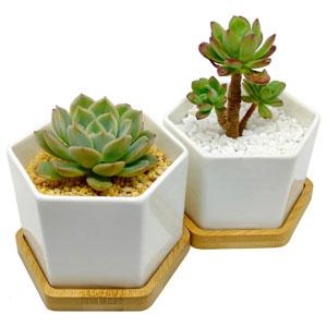"Espoir Living 4"" Hexagonal White Ceramic Succulent Planter"