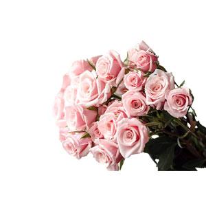 "Farm Direct 50 Fresh Pink Roses | 50 cm. long (20"") - Fresh Flower Delivery Roses"